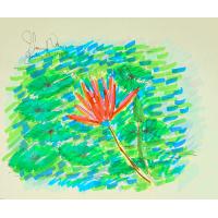 Claude Monet In Focus